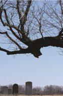 Moon Lake & The Wicked Tree Delta Magazine Article